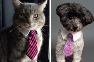 Corbatas para Mascotas, Lujo o Excentricidad