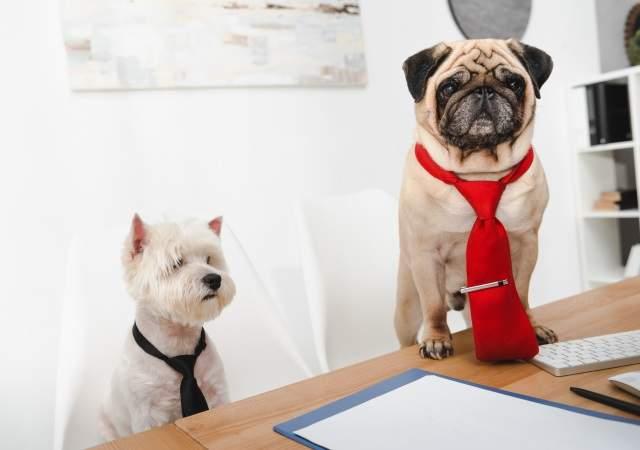 corbatas para perros y mascotas